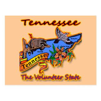 Tennessee The Volunteer State Racoon Flower Bird B Post Card