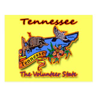 Tennessee The Volunteer State Racoon Flower Bird B Postcard