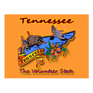 Tennessee The Volunteer State Racoon Flower Bird B Post Cards