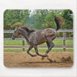 Tennessee Walker Filly Mousepad