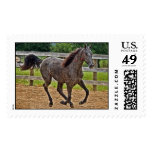 Tennessee Walker Yearling Gallop Postage Stamps