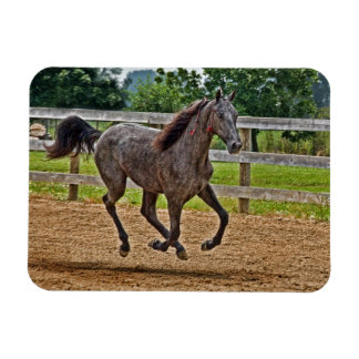 Tennessee Walker Yearling Gallop Magnets