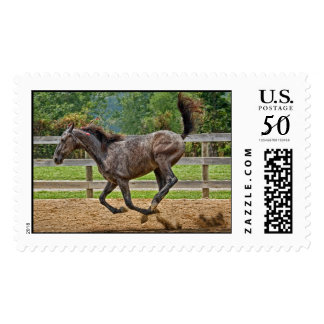 Tennessee Walker Yearling Tail Up Postage