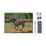 Tennessee Walker Yearling Tail Up Postage Stamps