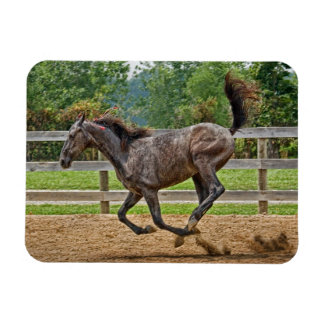 Tennessee Walker Yearling Tail Up Rectangular Magnet