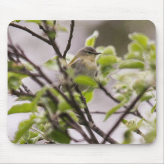 Tennessee Warbler Mouse Pad