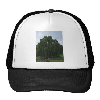 Tennessee Willow Tree Hat