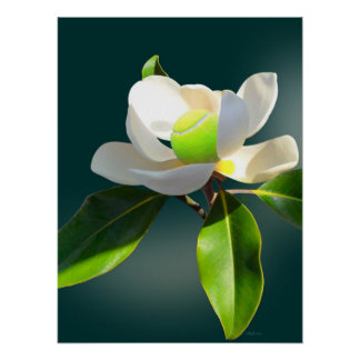Tennis Magnolia, Happy birthday Poster