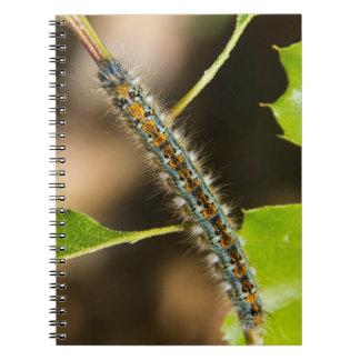 Tent Caterpillar Notebook