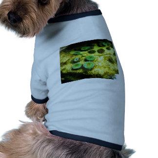 Tentacled verde camisetas mascota