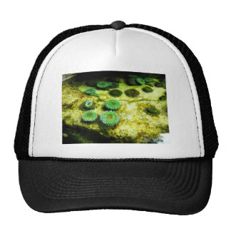 Tentacled verde gorras