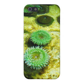 Tentacled verde iPhone 5 carcasas