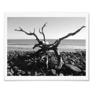 Tentacles Photo Print