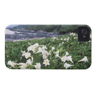 Teppo Yuri (Lily), Yakushima, Kagoshima, Japan iPhone 4 Cases