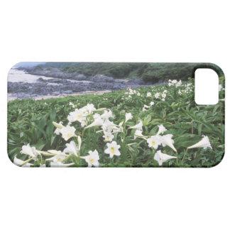 Teppo Yuri (Lily), Yakushima, Kagoshima, Japan iPhone SE/5/5s Case