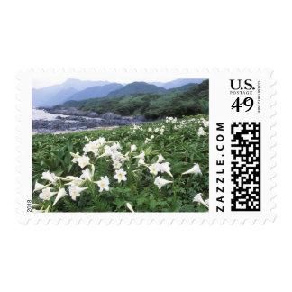 Teppo Yuri (lirio), Yakushima, Kagoshima, Japón Sello Postal