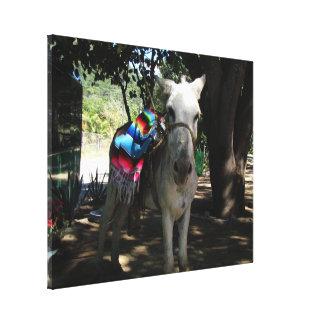 Tequila Donkey Canvas Print