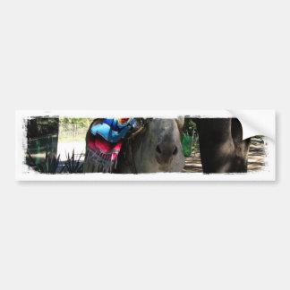 Tequila Donkey Car Bumper Sticker