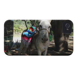 Tequila Donkey Case-Mate iPhone 4 Cases