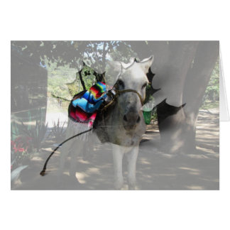 Tequila Donkey Greeting Card