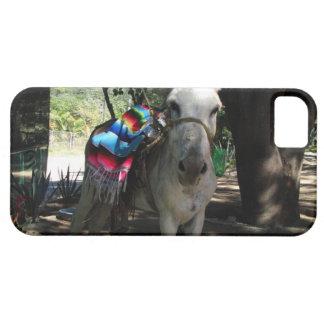 Tequila Donkey iPhone 5 Case