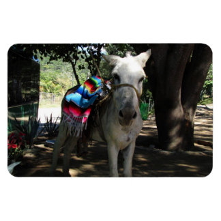 Tequila Donkey Magnets