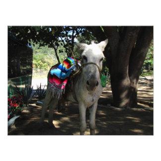 Tequila Donkey Photo Print