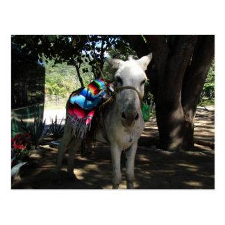 Tequila Donkey Postcard