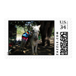 Tequila Donkey Stamp