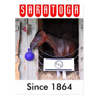 Terciopelo rojo en Saratoga Postal