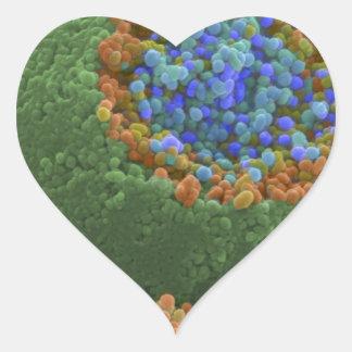 Terminación nerviosa quebrada colcomanias de corazon