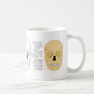 Termine el diagrama del frente del cráneo humano taza de café