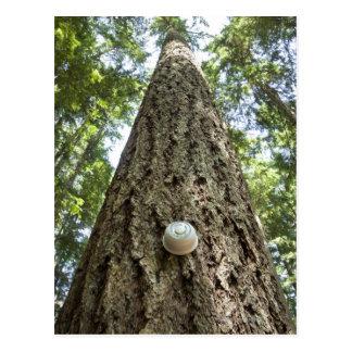 Termóstato en un árbol alto en un bosque postal
