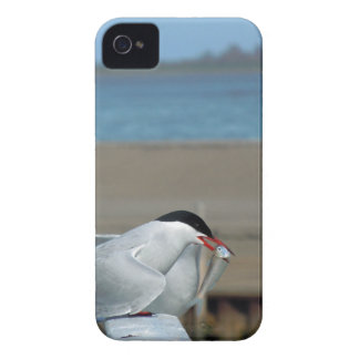 Tern-202 iPhone 4 Cover