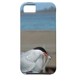 Tern-202 iPhone SE/5/5s Case
