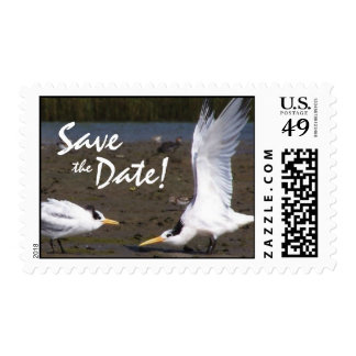 Tern Bird Courtship Wildlife Save the Date Postage