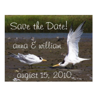 Tern Bird Courtship Wildlife Save the Date Postcard