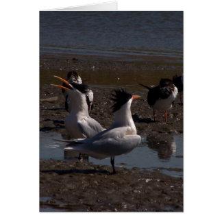 Tern Birds Wildlife Animals Wetlands Beach Card