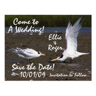 Tern Birds Wildlife Save the Date Postcard