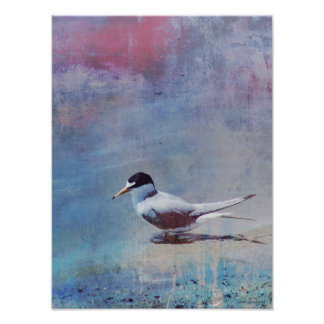 Tern by the Shore 12x16 Canvas Poster Print