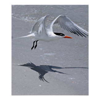 Tern Flapping Wings Print