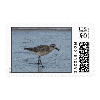 Tern on the Beach  Stamp