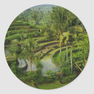 Terrace Ricefield in Bali Classic Round Sticker