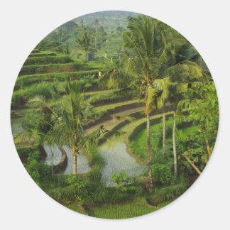 Terrace Ricefield in Bali Classic Round Sticker
