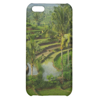 Terrace Ricefield in Bali Cover For iPhone 5C