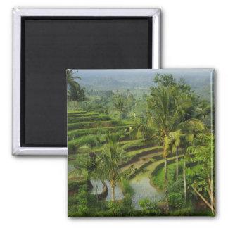 Terrace Ricefield in Bali Fridge Magnet