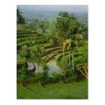 Terrace Ricefield in Bali Postcard