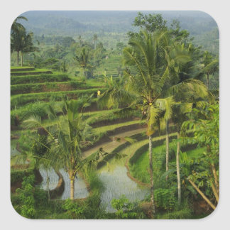 Terrace Ricefield in Bali Square Stickers