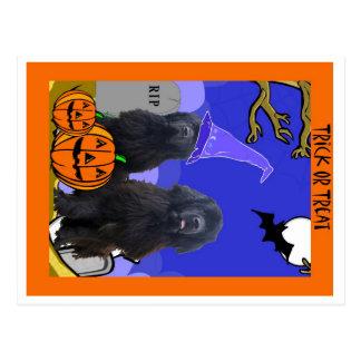 Terranova persigue Halloween Postales
