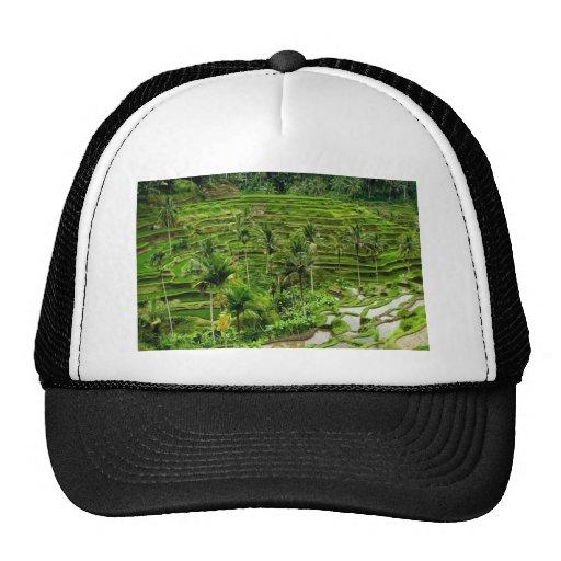 Terraza del arroz en Bali Gorro De Camionero